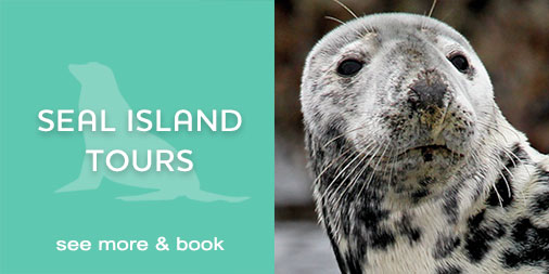 St Ives Boat Trips | Seal Tours