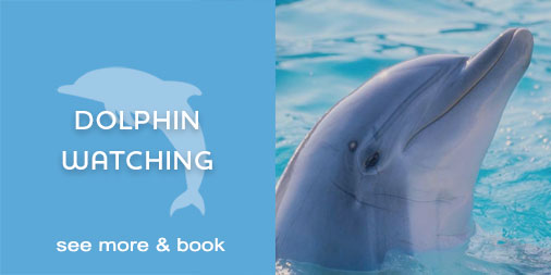St Ives Boat Trips | Dolphin Tours