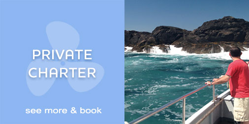 St Ives Boat Trips | Private Charter